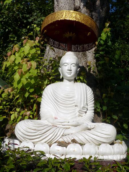 Bodhi tree in Wat Umong Maha Therachan